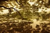 Vietnam  Ha Noi  Hoan Kiem Lake a Huge Tree Hangs Low over the Still Waters of Hoan Kiem Lake