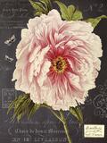 Vintage Botanical - Peony
