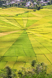 Indonesia  Flores Island  Cancar the Attractive Spider S Web Rice Paddies Near Ruteng