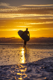 Uk  Cornwall  Polzeath a Woman Comes in from an Evening Surf Against a Stunning Sunset