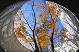 Asia  Japan  Honshu  Yokohama  Autumn Trees