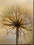 Dandelion Flower Nature