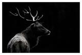 The deer soul