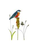 Bluebird on Seeds