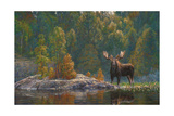 North Country Moose