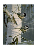 Chickadees at Dawn