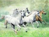 Dream Horses 028