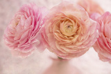 Pink Persian Buttercup Bouquet