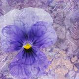 Viola - Secret Love