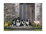 Farm Animal Stable