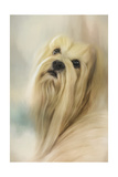 Portrait of a Lhasa Apso