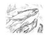Aquatic Salmon Home Pencil