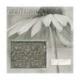 Echinacea I