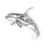 Aquatic Orca Pencil
