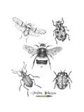 Graphite Bugs
