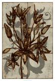Rustic Allium