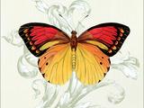Butterfly Theme III