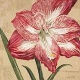 Blooming Wonder I