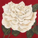 Rosa Blanca Grande I