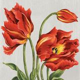 Tulips on Silk