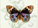 Butterfly Theme I