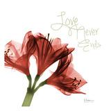 Amaryllis Love