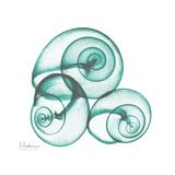 Shamrock Sky Snails 2