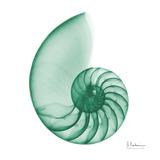 Jade Water Snail 2