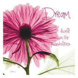 Pink Chrysanthemum Dream