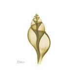 Genie Tulip Shell 2