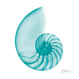 Turquoise Sea Shell