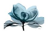 Midnight Magnolia 2 Reproduction d'art par Albert Koetsier