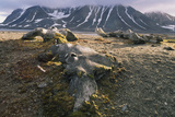 Old Whale Bones on the Shore of Svalbard