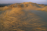 Sand Dunes Covered with Beach Grass