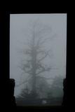 Misty Forest of Emei Shan