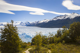 A View Looking Through the Trees of the Top of the Perito Moreno Glacier in Argentina