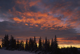 Silhouette of Spruce Trees over Dramatic Sky