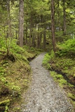 Path Inside Tongass National Forest