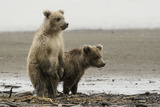 Two Brown Bear Cubs at Silver Salmon Creek Lodge in Lake Clark National Park
