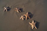 Five Starfish Washed Ashore on the Beach