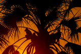 Silhouetted Baboons Sitting in a Palm Tree at Sunset