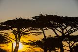 Sunrise in Monterey Bay  California