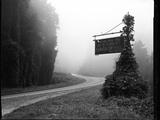 A Sign Covered in Kudzu on Highway 74 Near Bryson City  North Carolina