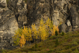 Fall Foliage in Denali National Park  Alaska