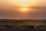 Wildebeest and Common Zebras  Equus Quagga  Grazing During Sunset
