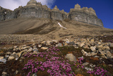 Mountain with Blooming Saxifrage