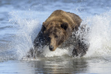 Brown Bear Fishing at Silver Salmon Creek Lodge in Lake Clark National Park