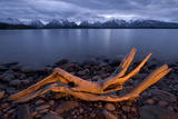 A Piece of Driftwood with Jackson Lake and the Teton Range in Grand Teton National Park