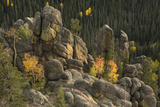 The Fall Colors of Aspen Trees in the East Fork of the Little Colorado River in Arizona