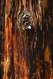 Bark of Dead Pine Tree in Rocky Mountain National Park  Colorado